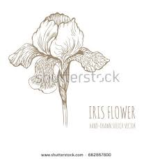 iris flower silhouette isolated on white stock vector 102241333