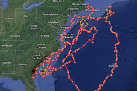 Map East Coast Florida by You Can Now Track Sharks Off The East Coast In Real Time The Verge