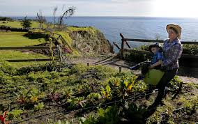 Blue Family In The Night Garden Big Sur Lost A Bridge And Slipped Back In Time Now Residents Are