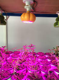 Purple Led Halloween Lights Led Plant Grow Light Halloween Decoration Pumpkin Basket Plant