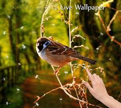 3d Home Hd Android Apps 3d Birds Live Wallpaper Android Apps On Google Play