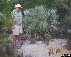 native south florida plants nps plant parade