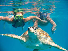 79 best all turtles great u0026 small images on pinterest animals
