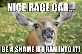 Deer Meme - deer meme google search lul 3 pinterest meme