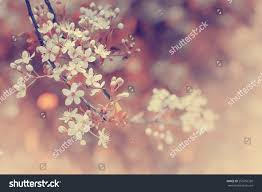 blossom tree over nature background spring stock photo 253756339