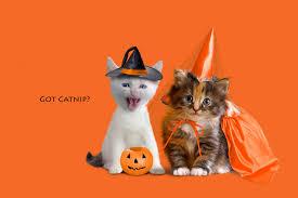 animal happy halloween u2013 halloween wizard