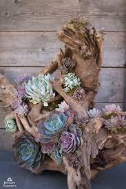 Succulent And Cacti Pictures Gallery Garden Design Https I Pinimg Com 736x 9d Dc A1 9ddca14ca314884
