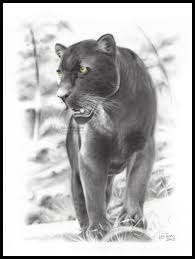 black panther by lucatedde big cats pinterest black panther
