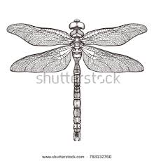 dragonfly tattoo stock images royalty free images u0026 vectors