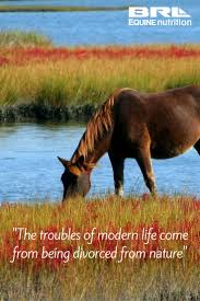 26 best horse lapbook images on pinterest horses the horse and