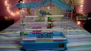 Petsmart Small Animal Cages Parakeet Cage Tour Youtube