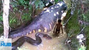 10 mysterious creatures spotted in the amazon youtube