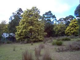 ephedra plant wikipedia cactoblastis be responsible u2013 be free