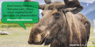 Moose Meme - moose want answers from presidential candidates smarter fuel future