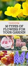 10 wonderful and cheap diy idea for your garden 3 spring plants