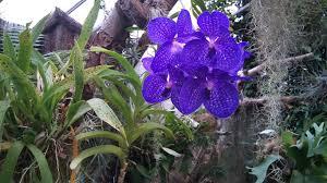 flowers purple rare flower beatiful image for hd 16 9 high