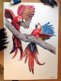 best drawings in colour dog color pencil drawingatomiccircus on