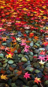 image autumn cozy fall iphone