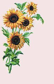 sunflower border clip art sunflowers clip art images sunflowers