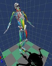 biomechanics of bodies bob biomechanical analysis third
