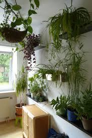 pflanzen für schlafzimmer schlafzimmer pflanzen 28 images pflanzen im schlafzimmer