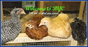 hiya from sheffield uk backyard chickens