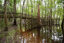 North Carolina National Parks images Travel congaree national park raleigh and nyc wedding jpg