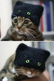Cat In The Hat Meme - lolcats the cat in the hat lol at funny cat memes funny cat