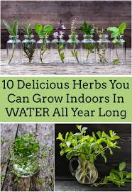 25 herbs vegetables u0026 plants you can grow in water herbs water