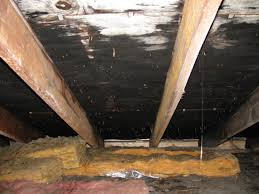 Removing Mold From Ceiling by Attic Mold Remediation Experts Toxic Black Mold Removal Ma