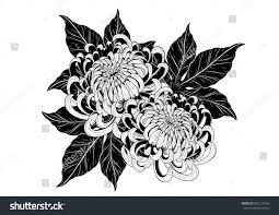 chrysanthemum vector on white background chrysanthemum stock