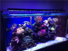 aquarium lights for sale customized wifi remote control smart full spectrum 60 inch 216w