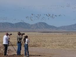 bird whirled sandhill cranes an experience of wonder purple