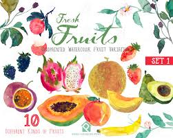fruit fresh fruits watercolor clipart watercolour fruit painting direct