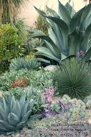 list of california native plants best 25 california native landscape ideas on pinterest drought