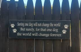 shelter project one step closer animal rescue o s c a r a
