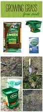 best 25 growing grass from seed ideas on pinterest yard