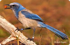 Florida birds images Birds gfbwt jpg