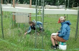 plants native to oregon uo heads climate change study of native northwest prairie plants