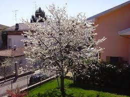 albero giardino â l albero da frutto racchiude sia bellezza utilitã