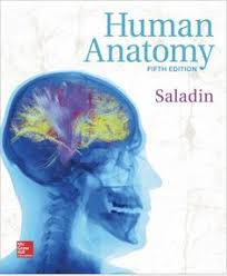Anatomy And Physiology Pdf Books Hole U0027s Human Anatomy And Physiology Student Edition 12th Edition