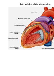 Anatomy Of Heart Valve Lecture 4 Heart Anatomy