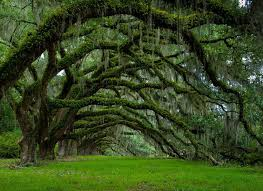 the 23 most gorgeous trees from around the world you won t believe