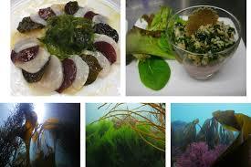 comment cuisiner les algues food algues