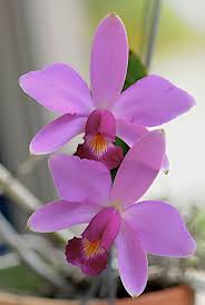 Orchids Facts by 4559 Best Orchids Images On Pinterest Plants Flowers And Orchids