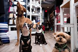 Dog Grooming Salon Floor Plans How To Start A Profitable Pet Grooming Business