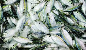 can offshore fish farming feed a hungry world the peak