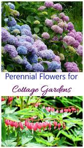 cottage garden plants perennials annuals u0026 bulbs for cottage gardens