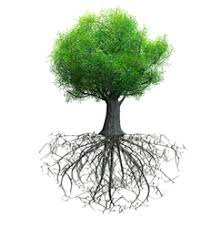 new article by clean crawls lists problems tree roots cause in