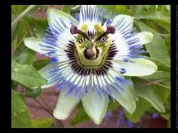 Tropical Rainforest Plant Species List - amazon rainforest flowers amazon rainforest beautiful flowers